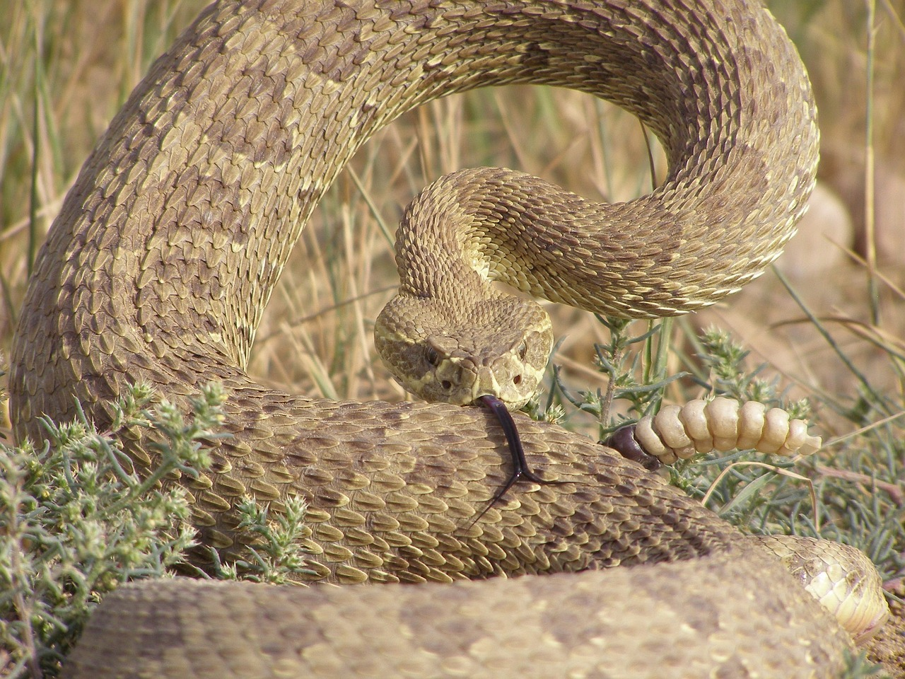 Poisonous Snakes: How to avoid them and what to do if they bite